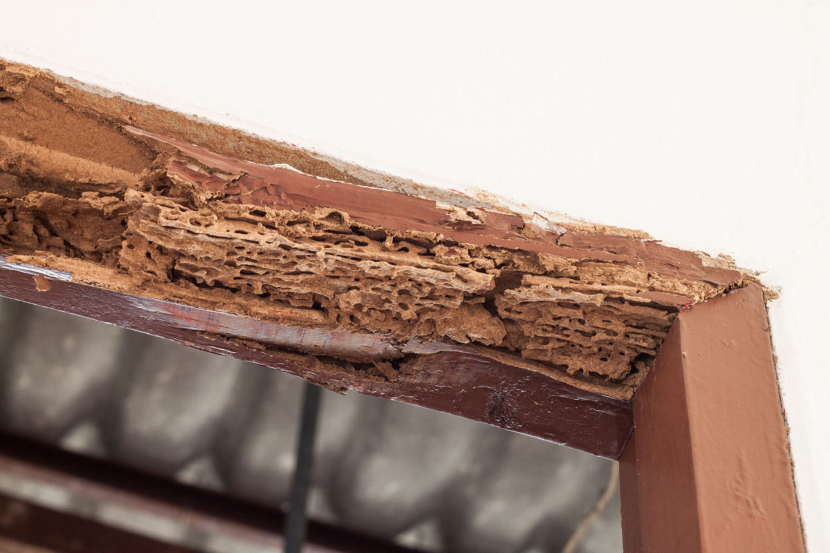 pest inspection termites timber frame